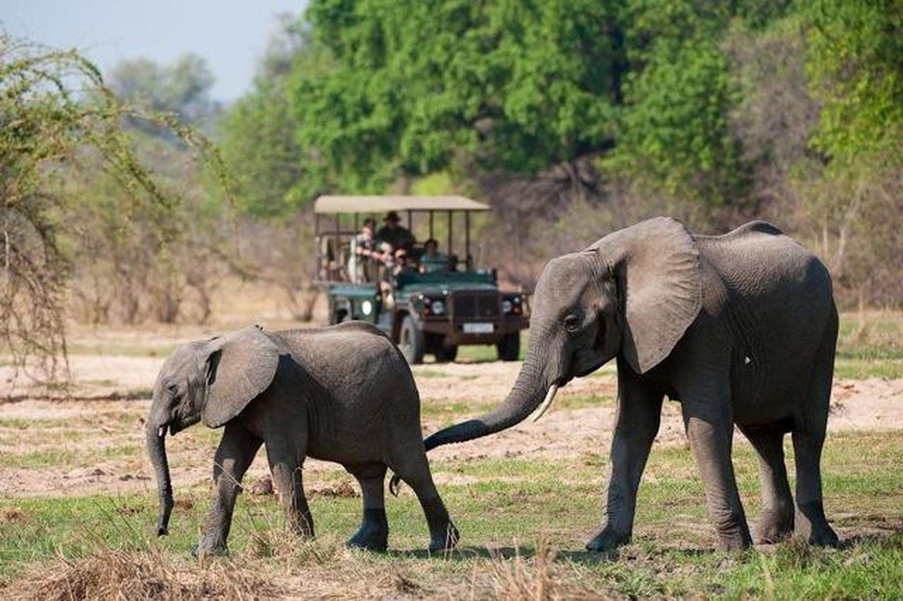 7-Day South Luangwa & Victoria Falls Safari - Zambia Itinerary