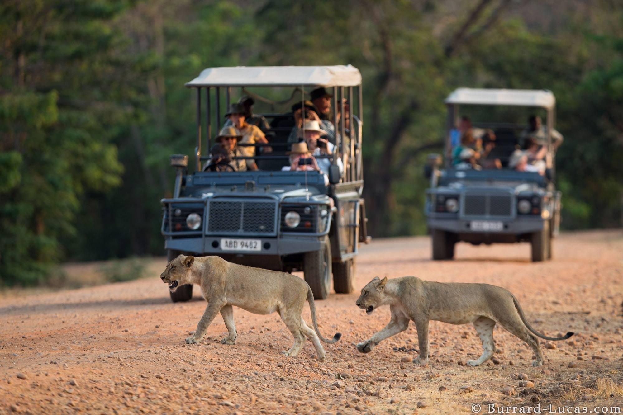 8-Day Stunning Safari in Zambia - Zimbabwe and Zambia Itinerary